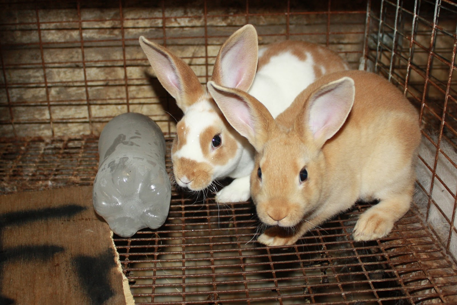 Once Upon a Family: Keeping Bunnies Cool