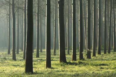 arbres givre forêt brume Seine-et-Marne
