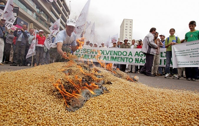 gmo-brazil-soybeans.jpg