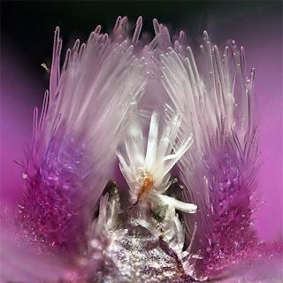 interior de una flor silvestre