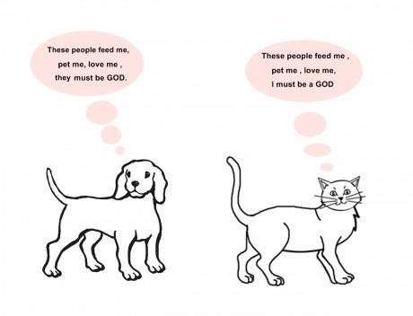 comparison essay between dog and cat Cats vs dogs there comes a time in most people's life when they decide to get a pet many people prefer to get an exotic animal such a snake, a bird, or a rodent.