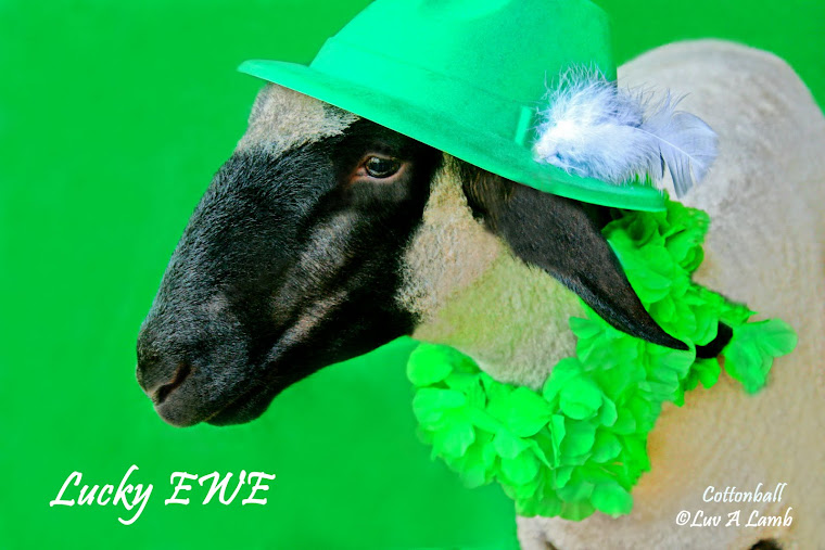 Lucky EWE!