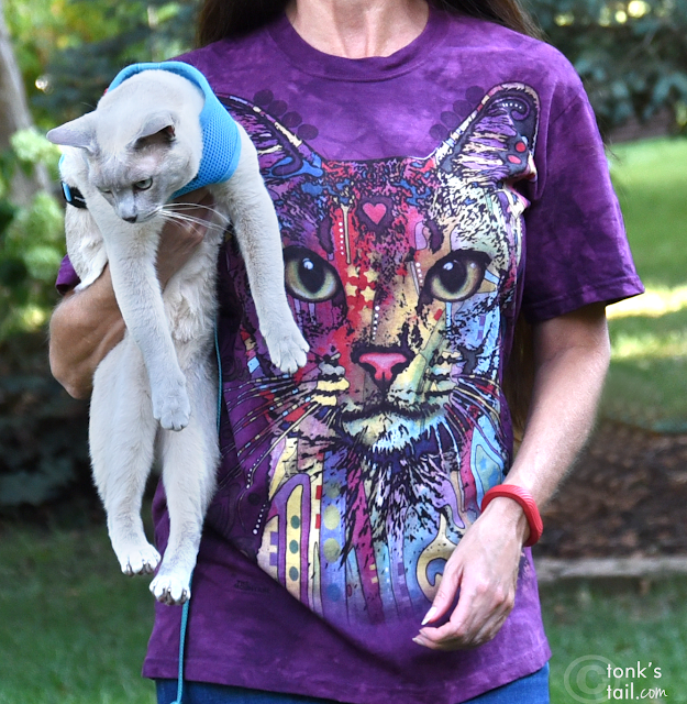 Abyssynian cat tee from The Mountain