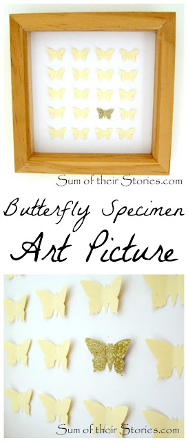DIY specimen butterfly art