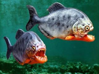 7 Ikan Yang Tidak Ada Di Sambas