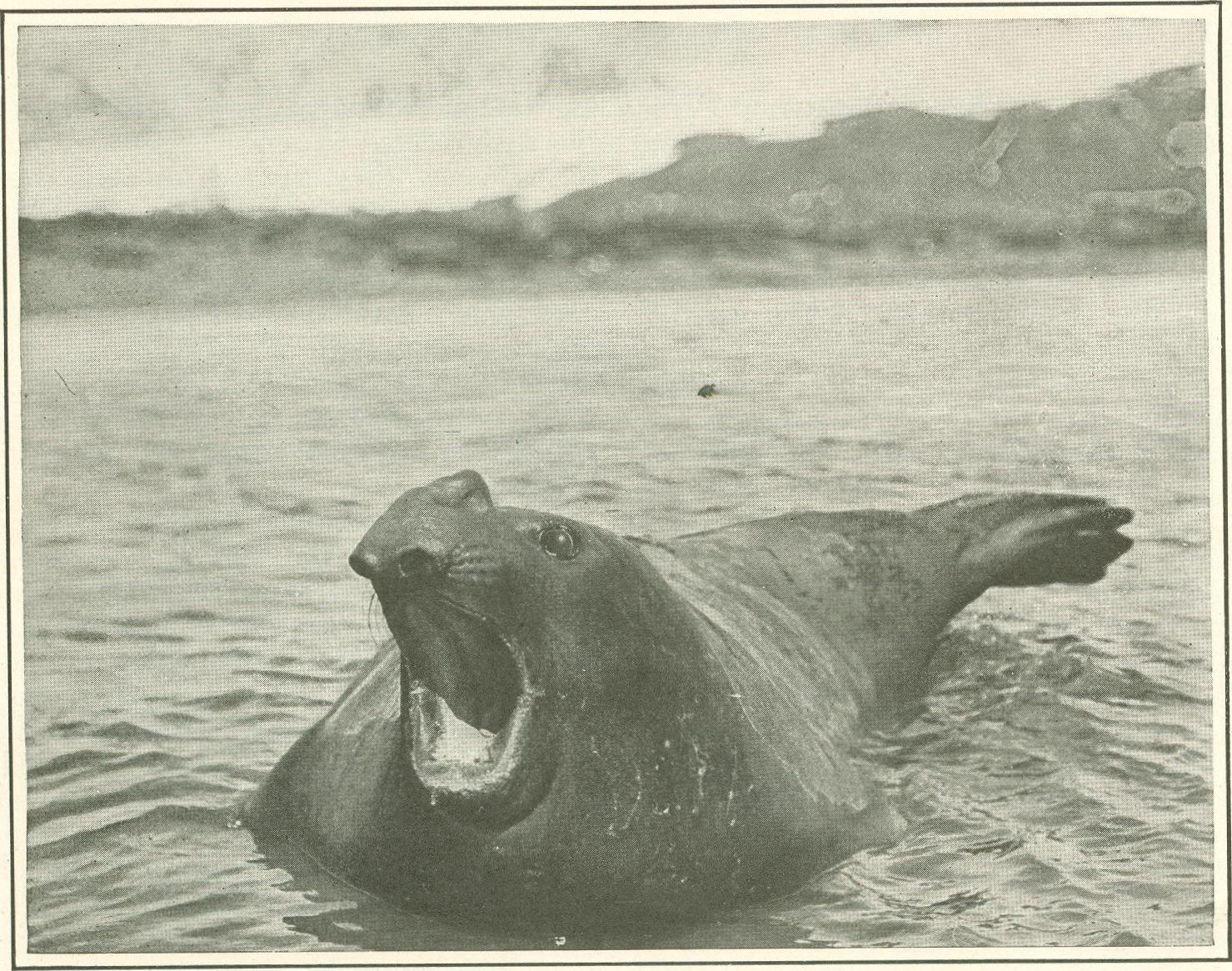 Digital History Project Antarctic Whaling At Grytviken