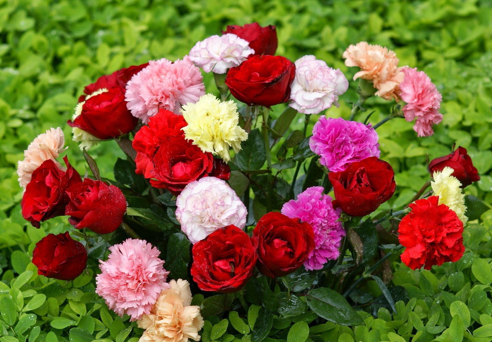Beautiful flowers image download free all hd wallpapers download beautiful flowers image download izmirmasajfo