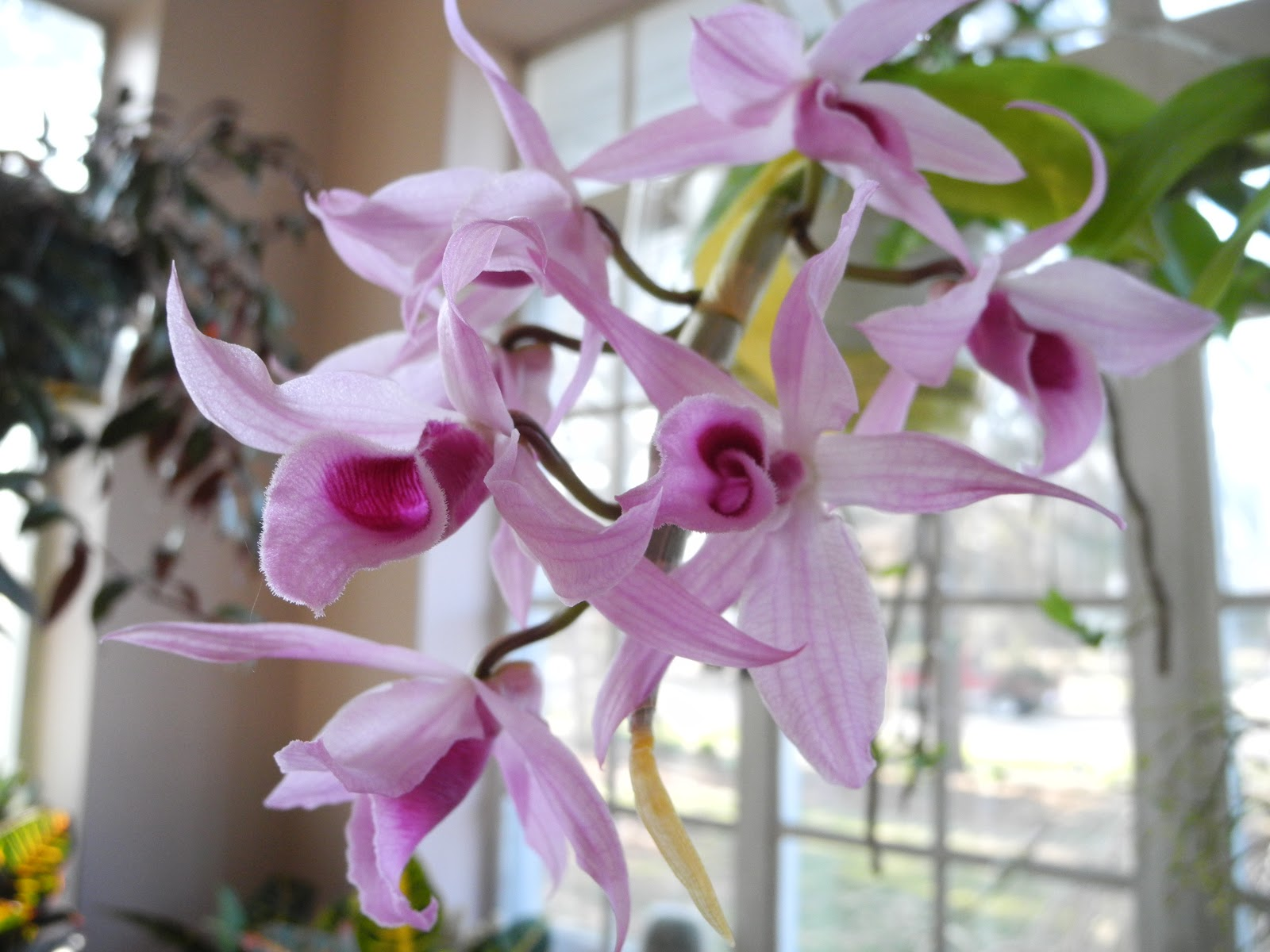blooming orchid position video