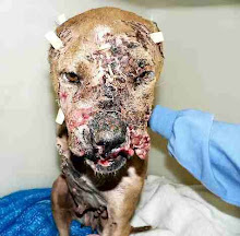Forced Dog Fighting
