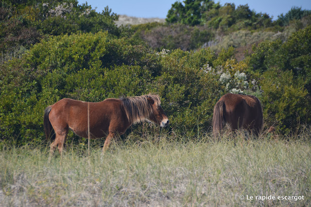 banker-ponies