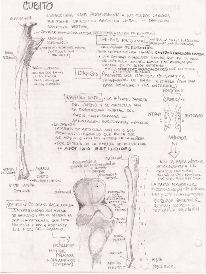 Anatomía Humana... Para Humanos: SISTEMA OSEO - MIEMBRO SUPERIOR