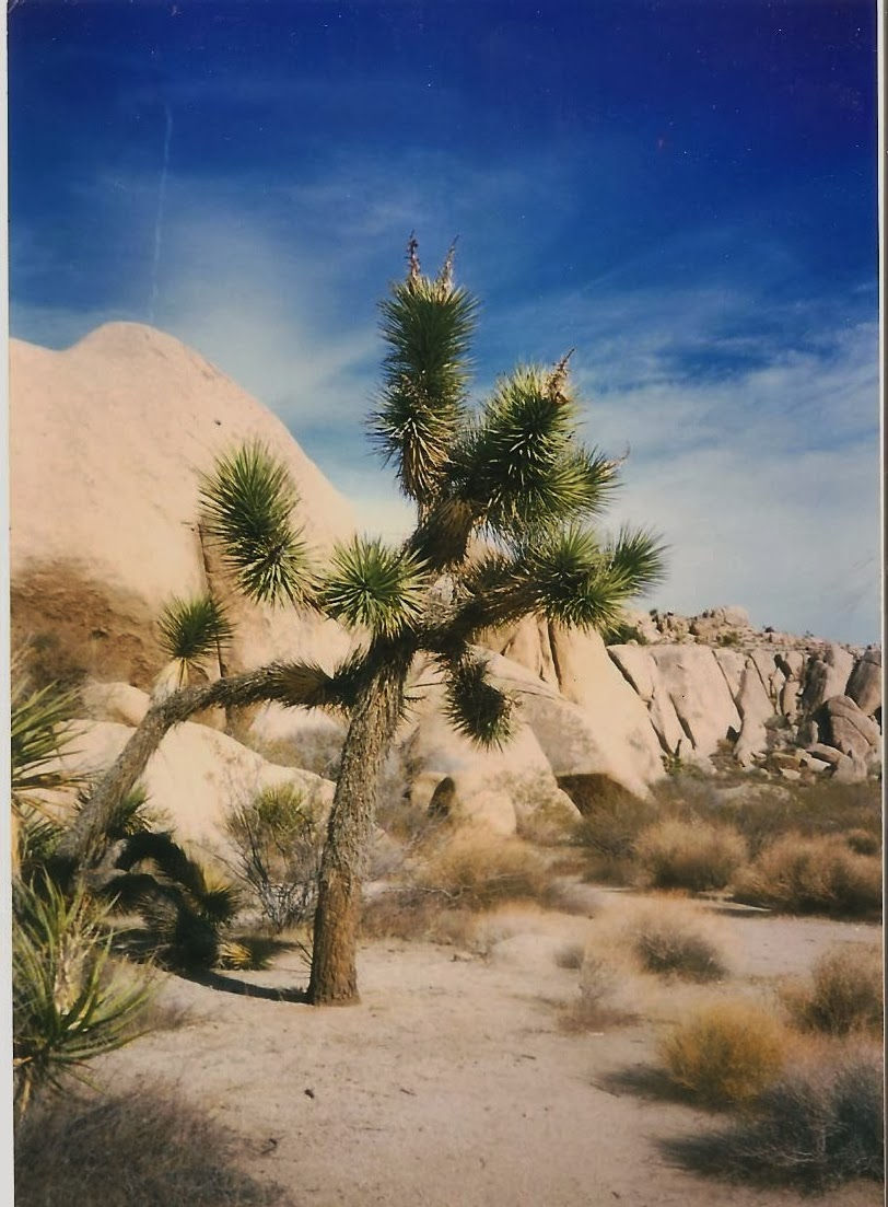 Joshua Tree Nat'l Park