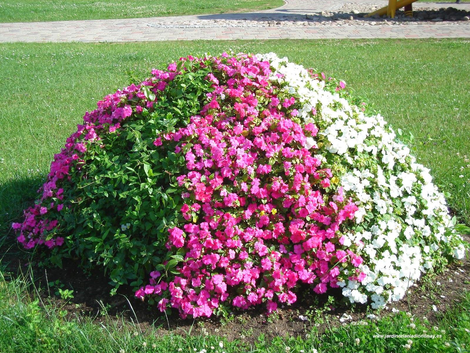 Jardineria eladio nonay ideas divertidas y bellas para - Plantas para jardineras ...