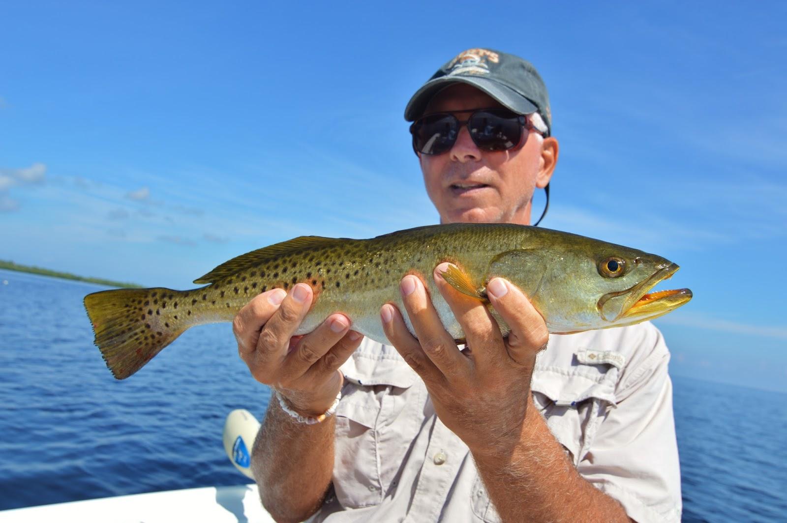 The pine island angler pine island fishing report the for Island current fishing report
