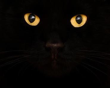 Gato preto.
