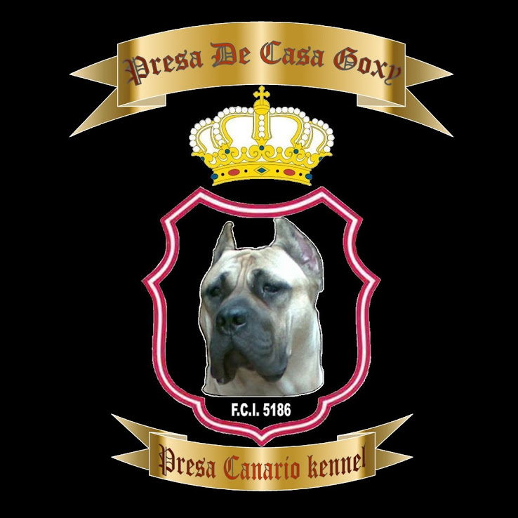 Presa De Casa Goxy - Presa Canario kennel