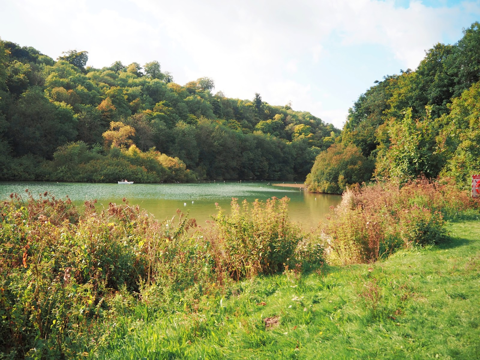 Swanbourne Lake, Arundel Sussex Nature Photography