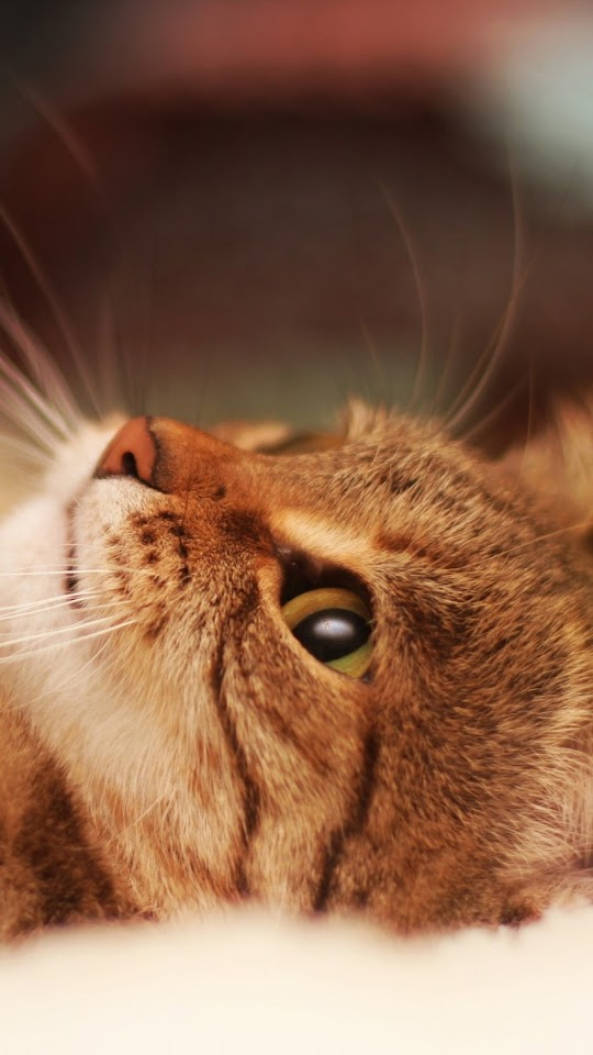 Cute Cat Paw Closeup  Galaxy Note HD Wallpaper