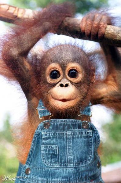 Spank the crazy monkey