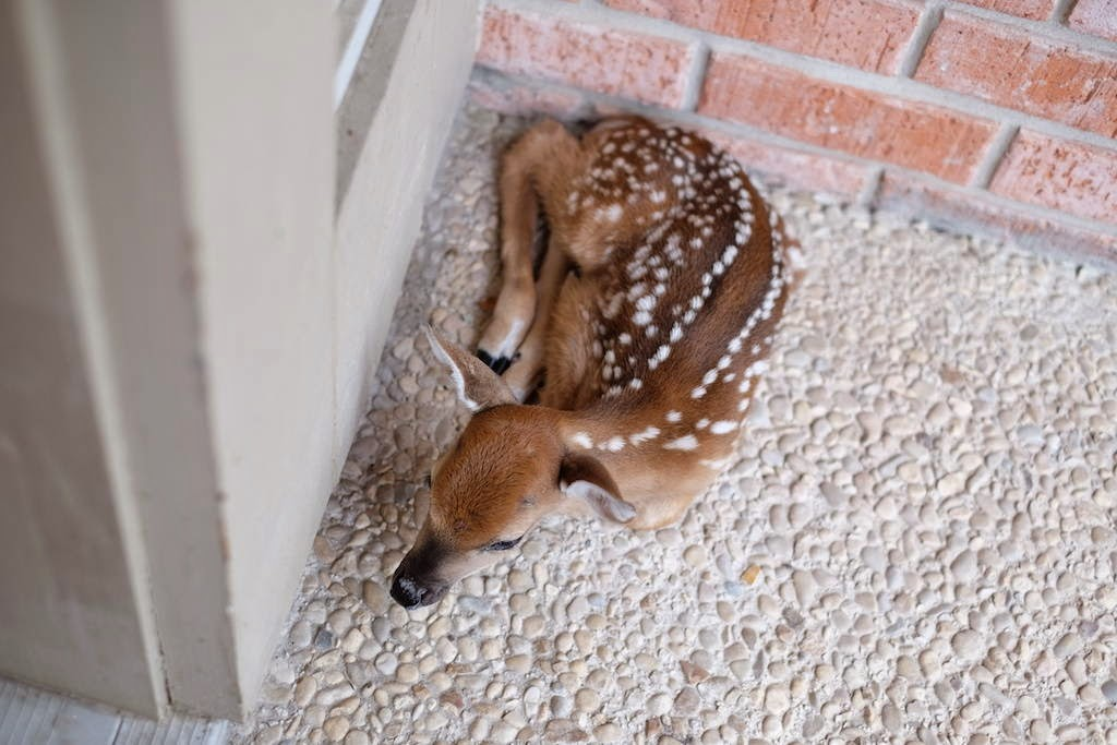 Funny animals of the week - 9 May 2014 (40 pics), cute animals, animal photos, cute baby deer