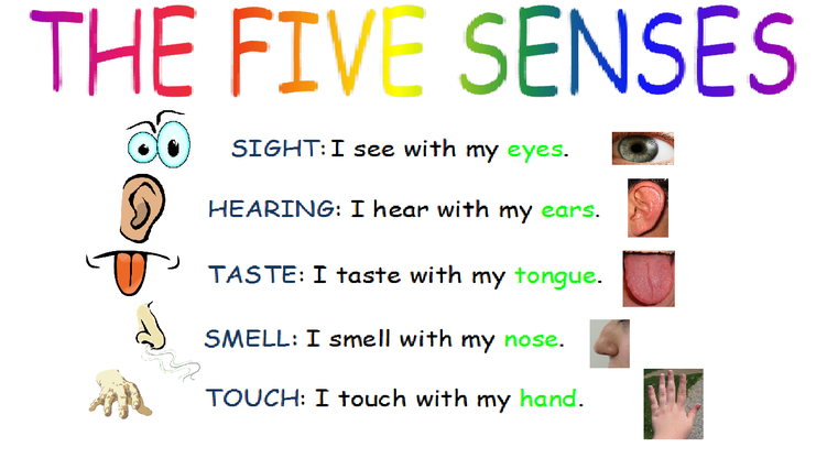 Five senses song
