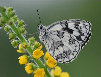Un fluture simplu