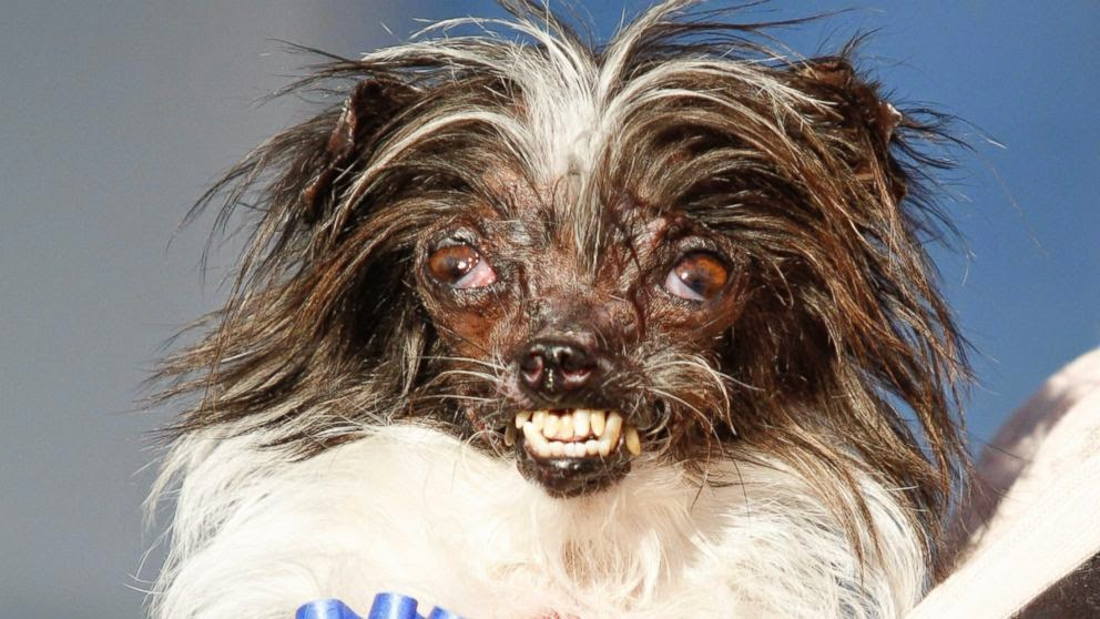 Worlds_ugliest_dog_peanut