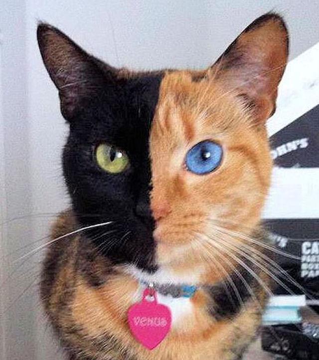 O Gato Mais Famoso Da Internet