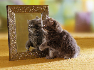 Funny Cat Looking In Mirror