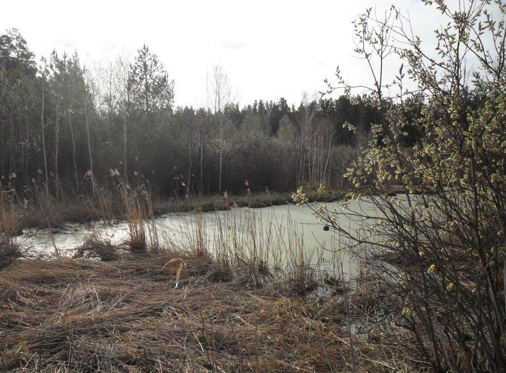 Журавлиное болото