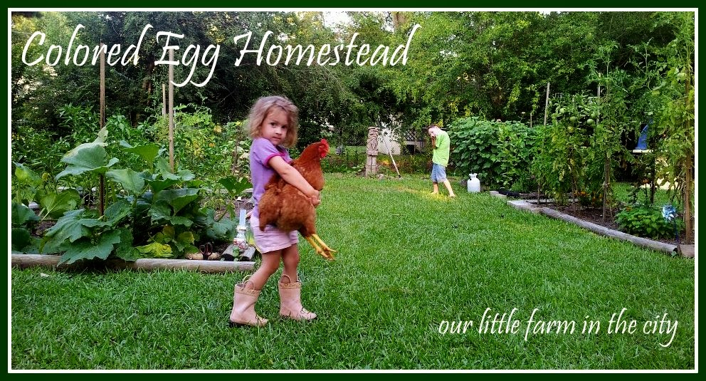 Colored Egg Homestead