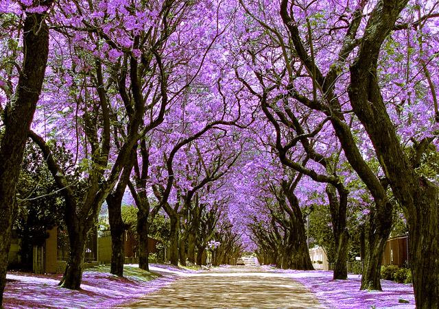 jacaranda-city-w1.jpg