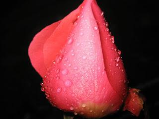 Flor para tu perfil de Twitter