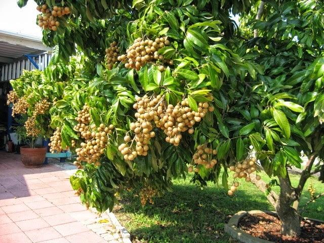 My Tho fruit market, fruit in Mekong Delta, Vietnamese fruit in Mekong Delta