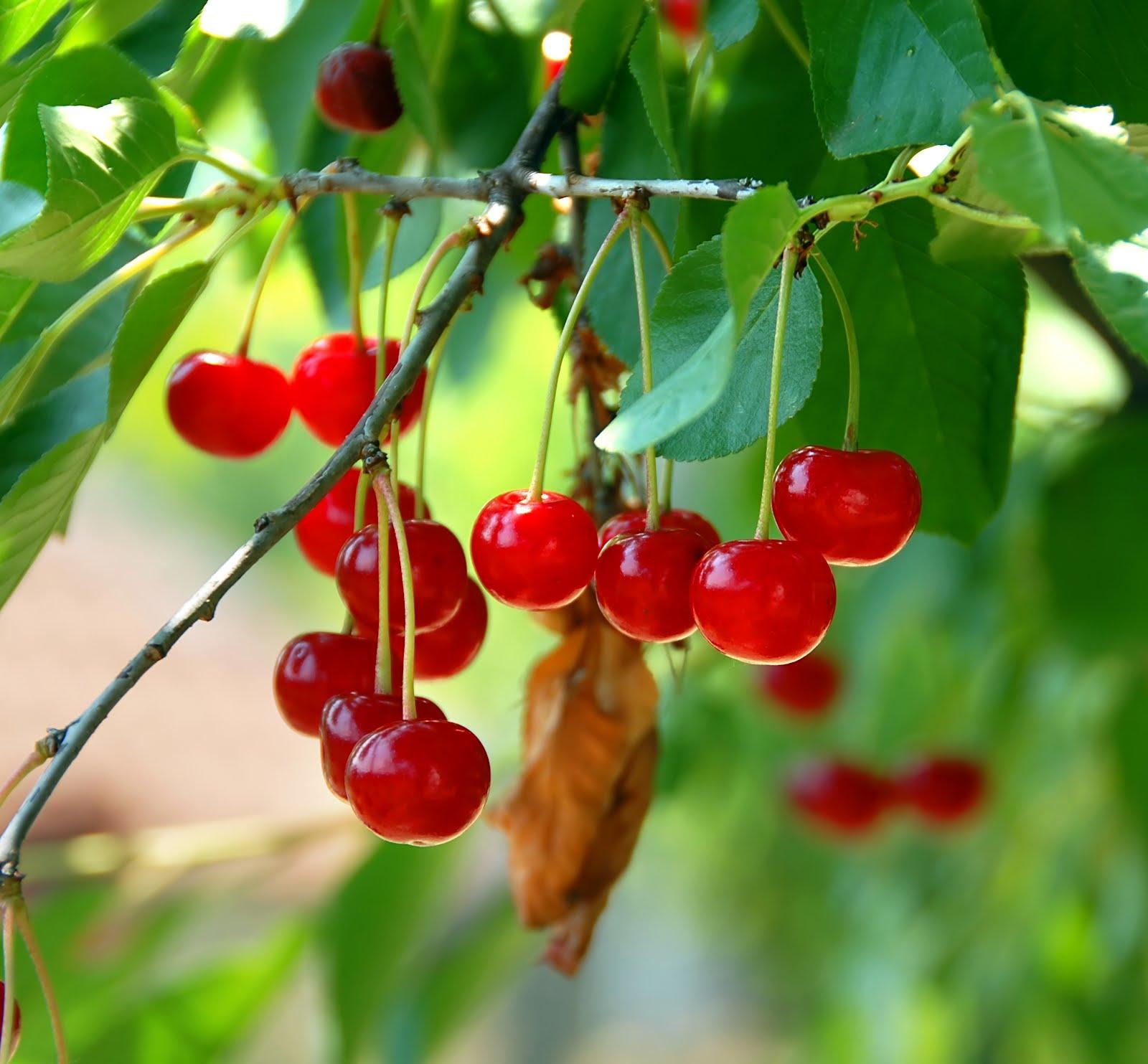 cherry.de