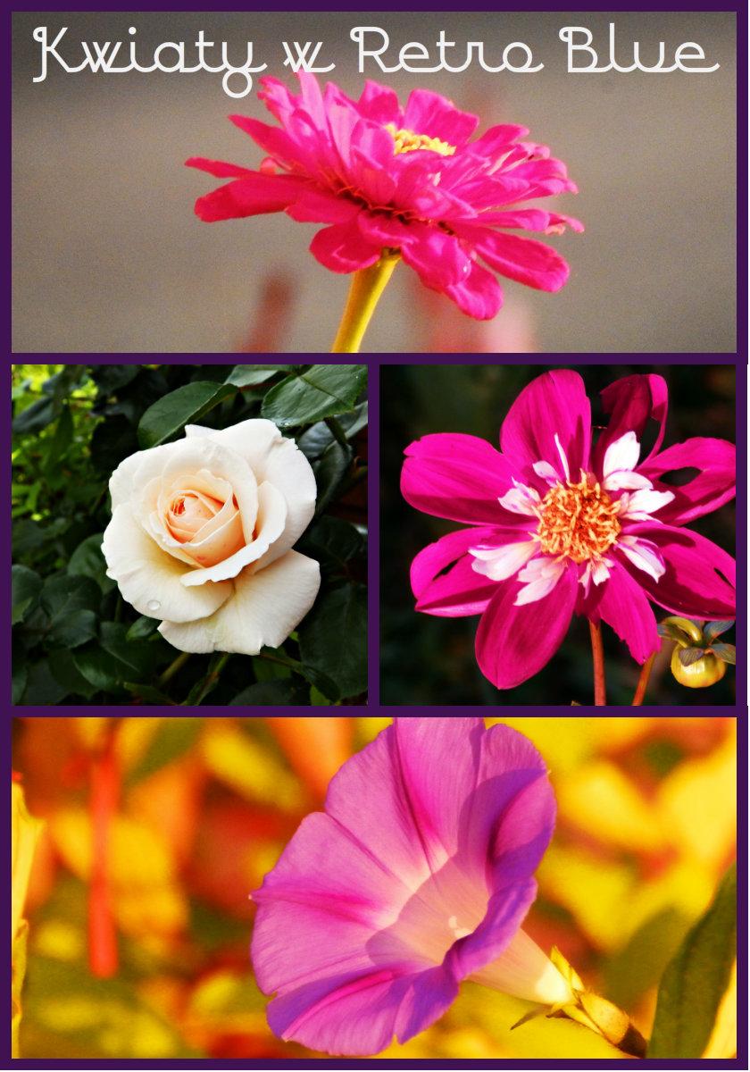 Kwiaty z mego ogrodu