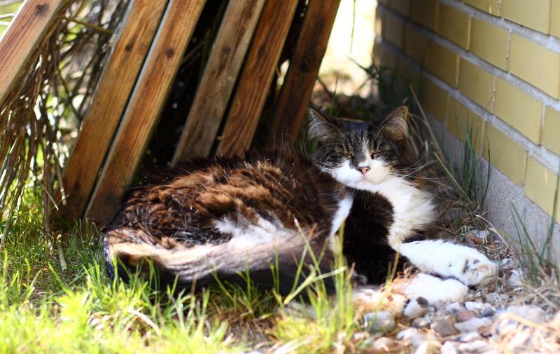The big meowski: noget om katte, hegn og angst