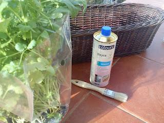 Ziołowy ogródek w kuchni. Jak to zrobić?