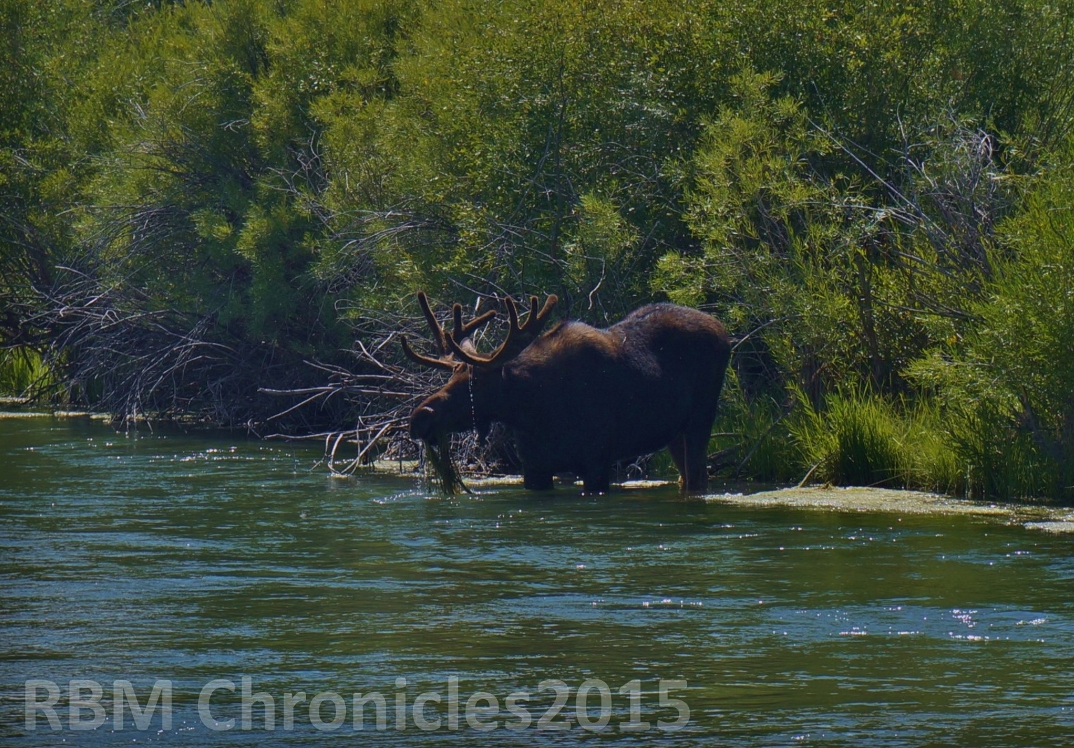 The red boat mark chronicles the moose days of summer for Beaverhead fishing report