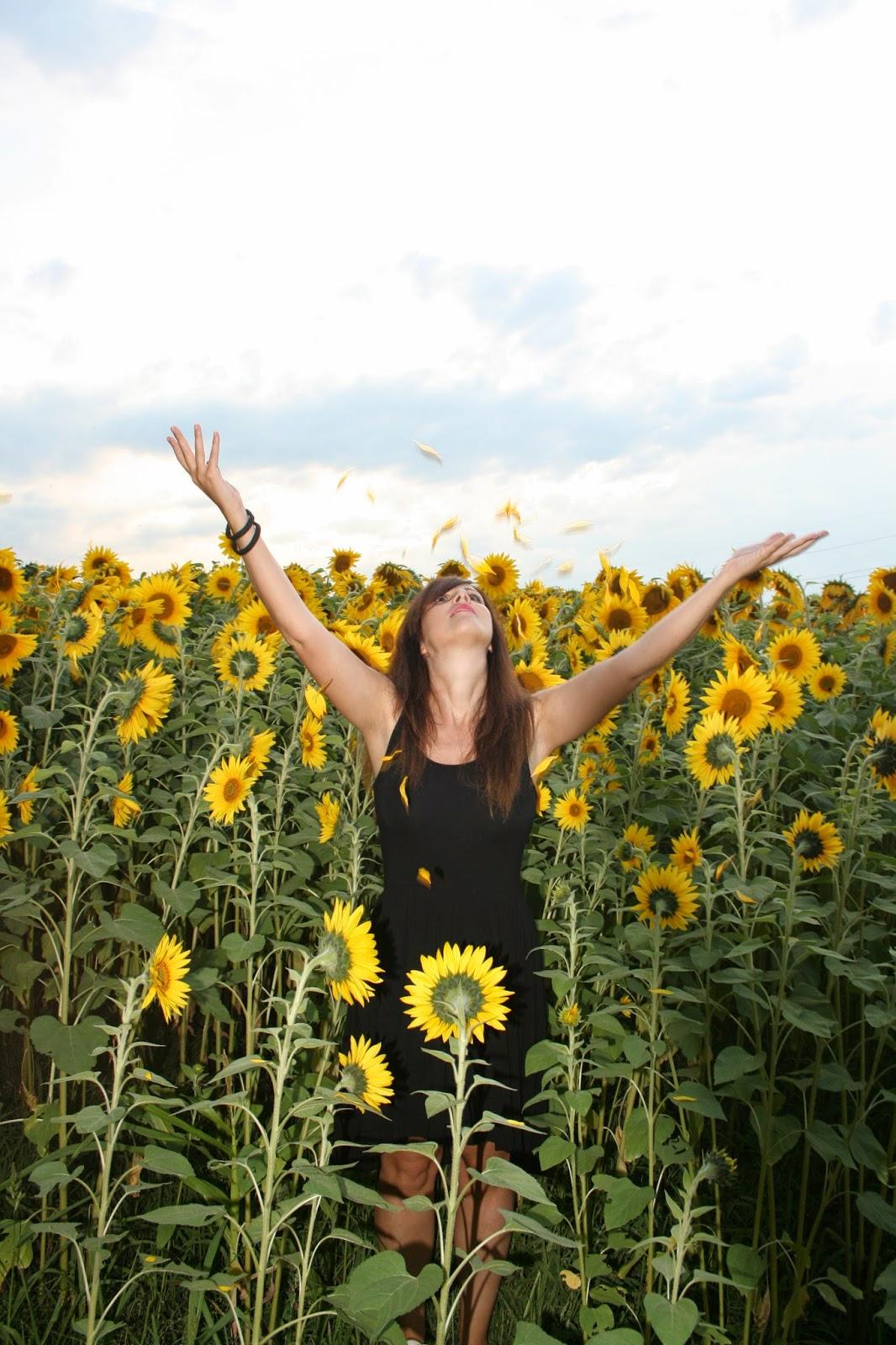 Campo de girasoles en Asturias. Sunflowers field in Asturias, Spain