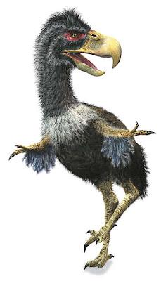 aves prehistoricas de america Titanis
