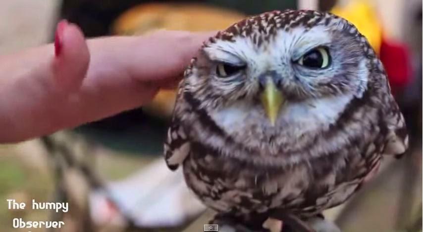 abbastanza MIGLIORI VIDEO DI ANIMALI DIVERTENTI E TENERI - FUNNY ANIMALS  DY06