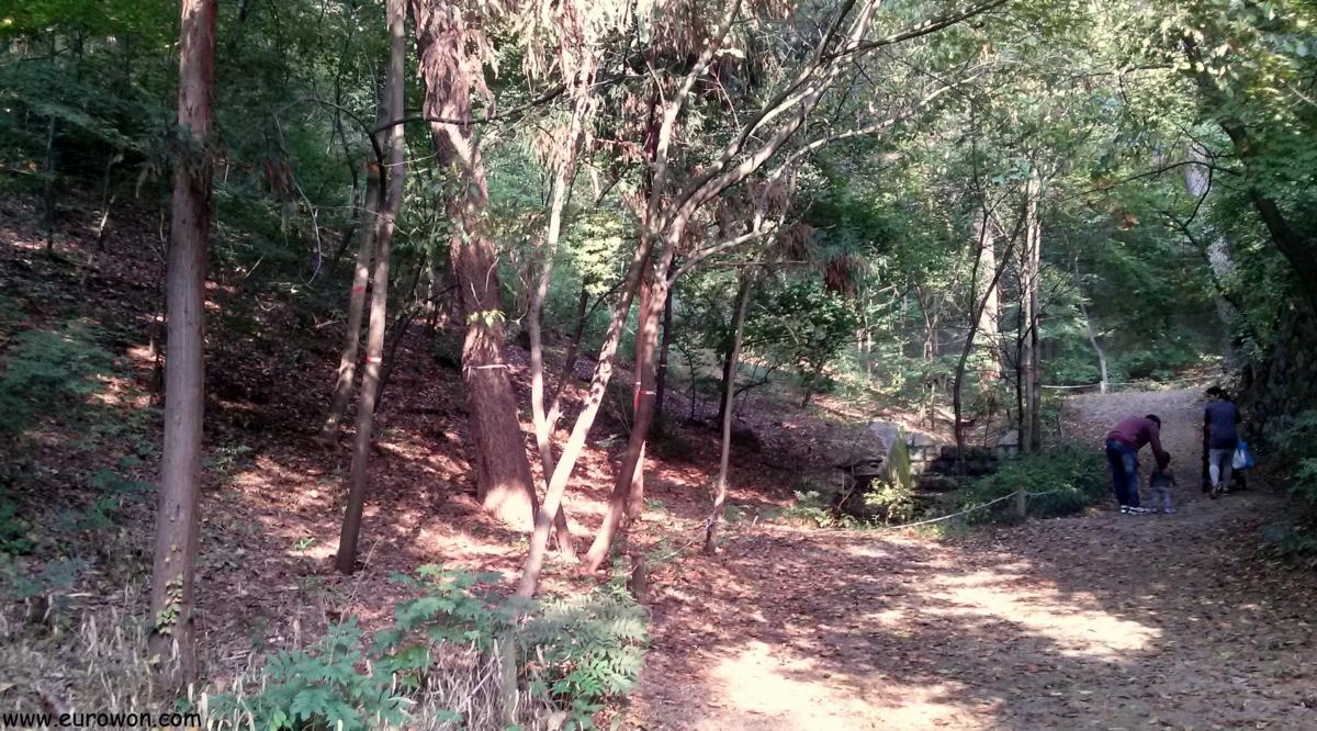 Paseando por un bosque de Seúl