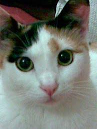Chiky de Carácter Felino