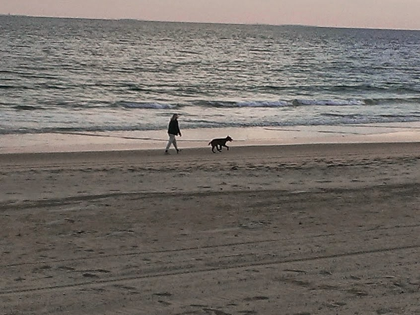 walking dog at beach