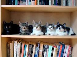 Kitaplık kedileri