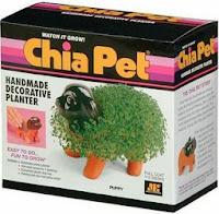 Original Chia Pet