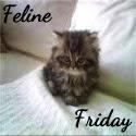http://comedyplus.blogspot.com/2014/08/feline-friday.html
