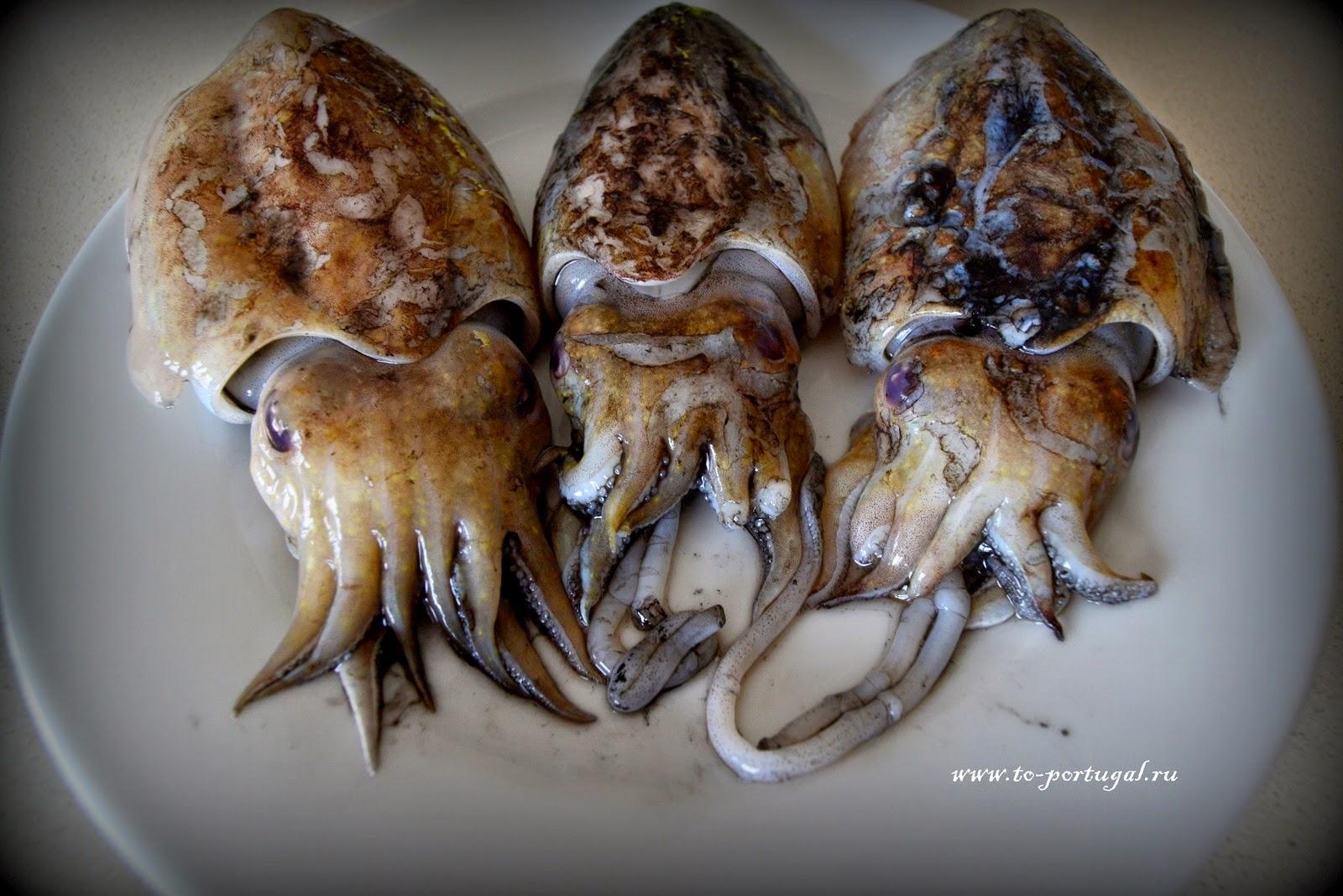 португальская кухня каракатица