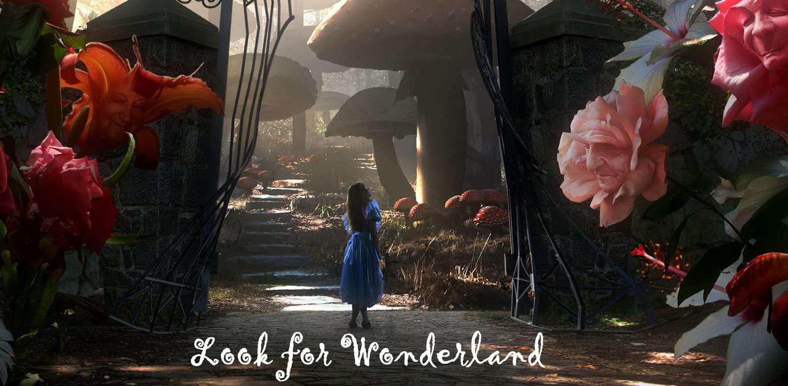 Look For Wonderland